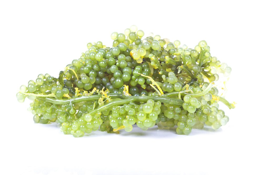 Dominican Sea grapes on white background